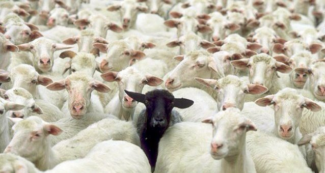 We are not lemmings (or sheep)